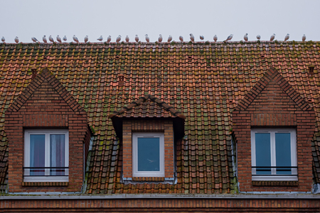 attic: Roof tiles on which sits a group of gulls. In the foreground of the attic window.