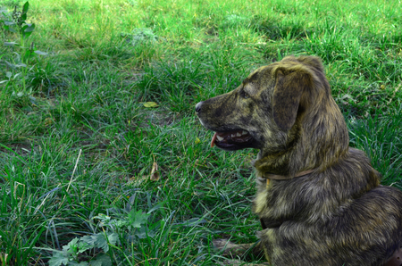 a mongrel dog lies in profile on a green meadow, a dog on the grass