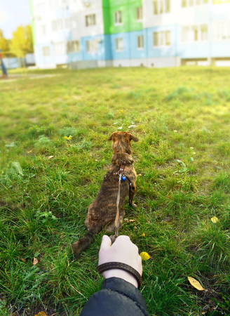 a man holds a low mongrel dog on a leash on the grass in the city, a first person view