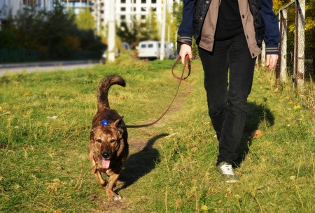 the dog runs alongside the owner on the grass for a walk in the city