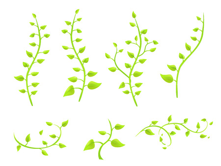 ivy twigs with leaves on a white background vector