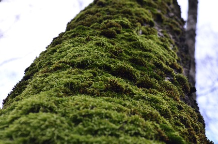 texture of moss in close up, macro green moss