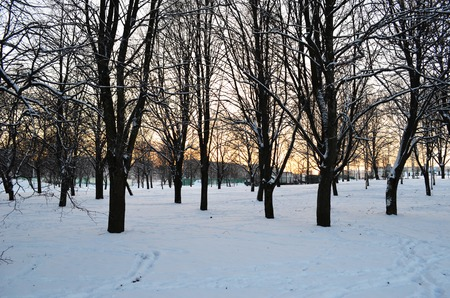sunset in winter forest, trees in the park on sunset background