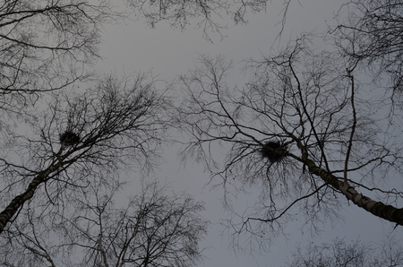 forest with bird nests, trunks of trees against the sky, spring nesting of birds Stok Fotoğraf