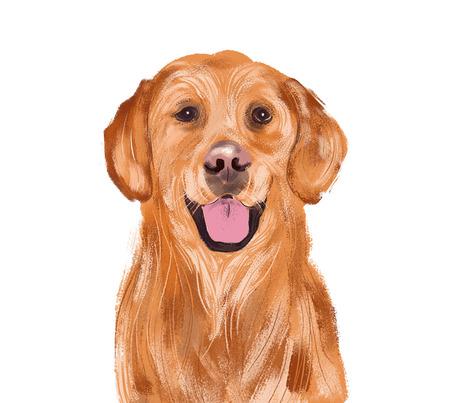 Golden dog illustration