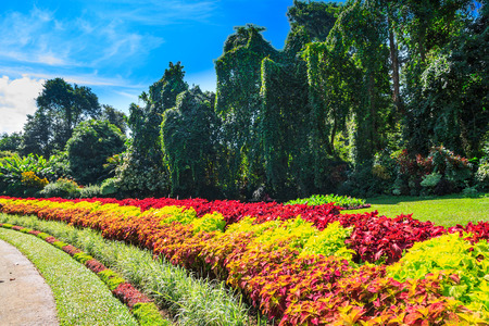 tropical evergreen forest: Multicolored alley of flowers and trees in the Royal Botanic Gardens, Kandy. Sri Lanka