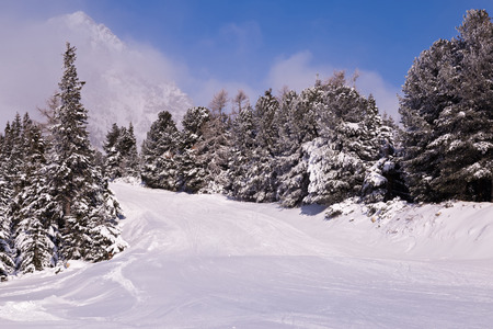 wintry weather: winter mountain landscape with beautiful fir trees on slope