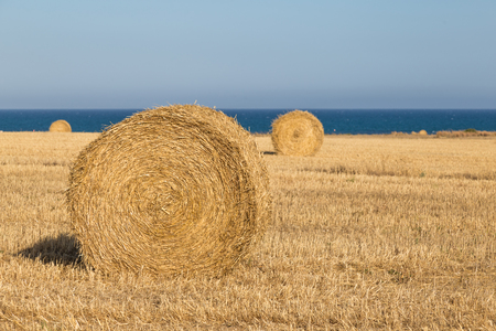 rural economy: Rural landscape: hay  rolls close up on wheat field - near the sea coast of Larnaca, Cyprus.