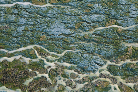 fulvous: Blue and green toxic algae on the water surface closeup. Environmental pollution. Ecological catastrophy.