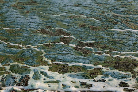 waste products: Blue and green toxic algae on the water surface closeup. Environmental pollution. Ecological catastrophy.