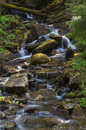 carpathians: Fast mountain river  flowing among mossy stones and boulders in green forest. Carpathians, Ukraine