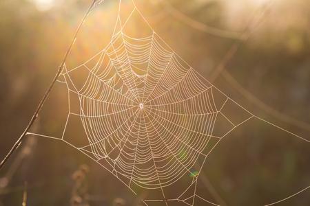 konzentrische Spinnennetznahaufnahme im Sonnenlicht auf dem natürlichen unscharfen goldenen Hintergrund. der Herbst kam