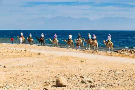 sinai desert: Dahab, Egypt, 24.10. 2017: Caravan of camels with tourists and cameleer in the Sinai desert on the shore of the Red Sea. Concept of adventure, tourism, and active  lifestyle
