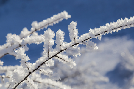 winter tale - large crystals of frost on the branches of tree close up on  background of blue blurred sky Stock Photo