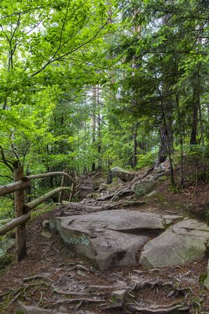 Hiking trail in forest mountain. Dovbush Rocks, Yaremche. Mountains Carpathians. Ukraine. Tourist destination, landmark