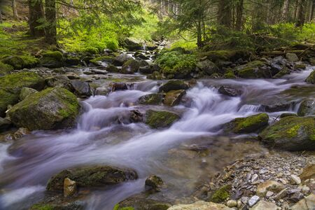 Forest mountain landscape at summer:  fast river flows in a coniferous forest among mossy stones. River Smre�ianka. Western Tatras. Žiarska valley. Slovakia.
