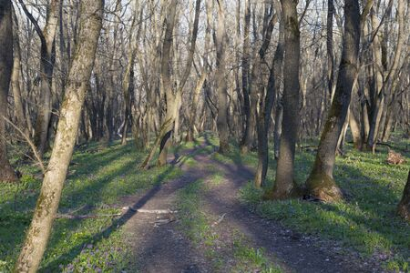 Spring nature landscape. Spring in forest. Winding black dirt road winds among leafless deciduous trees and wild flower. Samara forest. Ukraine, Dnipro region. Stock Photo