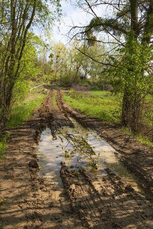 Landscape with dirt rural road in puddles of water among the green forest. Summer ukrainian nature. Surroundings of Opishnya village, Poltava region, Ukraine
