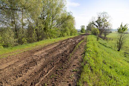 Landscape with dirt rural road among the green field. Summer ukrainian nature. Surroundings of Opishnya village, Poltava region, Ukraine