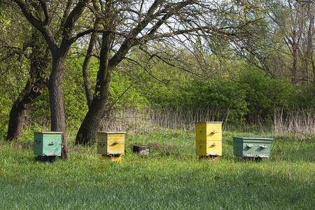Old apiary. Colorful wooden bee hives in the garden on green grass. Surroundings of Opishnya village, Poltava region, Ukraine