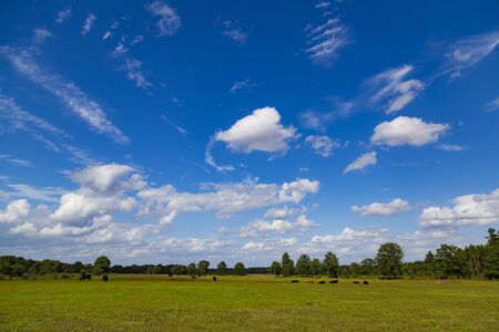 Hoge Kempen National Park in Flanders, Belgium at summer. Field with green grass on a background of blue cloudy sky.