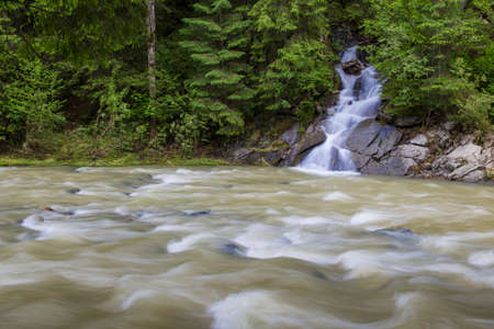 Summer landscape in forest mountains. Small mountain stream flowing among a green forest, influent into a fast river. Carpathians. Ukraine