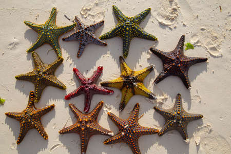 Multicolored starfishes, sea stars, close-up, on a background of sea sand.