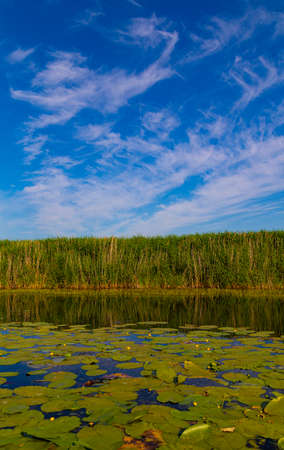 Scenic landscape on the calm lake overgrown with water lilies, surrounded by reeds. Beautiful clouds over water surface. Nature of Ukraine. Lake landscape