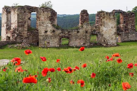 Ruined medieval castle Pidzamochok among red poppies and green grass. Buchach region, Ternopil Oblast, Ukraine. Tourist landmark, tourist destination.