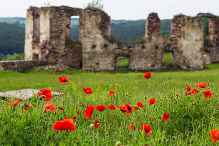 Ruins of medieval castle Pidzamochok among red poppies and green grass. Buchach region, Ternopil Oblast, Ukraine. Tourist landmark, tourist destination.