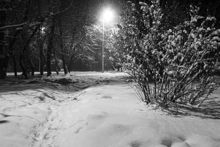 Winter night in the snowy old park. Snow covered ground among snowy trees. Winter cityscape. Black and white photo. Location: Smila city, Ukraine