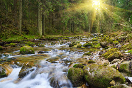 fast forest river flowing among mossy stones Stock fotó