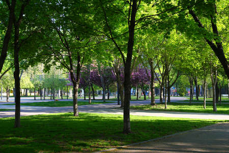 Spring in the urban park. Square Heroes, Dnipro city. Ukraine. Blooming sakura in the city square on a bright spring day