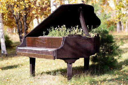 The bed for flowers equipped in an old black piano in the city park. Petunia flowers in an unusual creative bed.