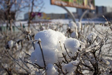 Snow on a Bush in winter in frost. Stockfoto