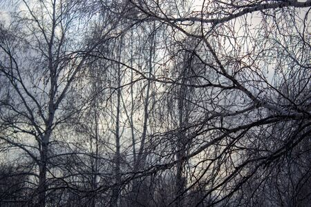 Looking up to grey sky through tree branches.