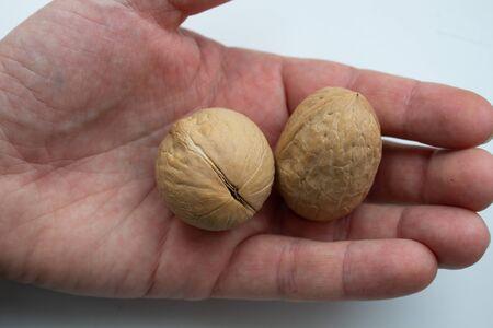 walnuts food nut in hand on white background isolation. Reklamní fotografie