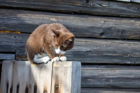 A brown kitten is sitting on the wooden door of a wooden house on the street. A kitten named Busia. The kitten is being played 免版税图像