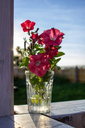 ink Petunia flowers in a glass. Flowers are in the country. Archivio Fotografico