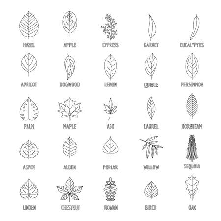 Leaf icons set. Outline illustration of 25 leaf vector icons for web