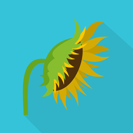 Flat illustration of sunflower vector icon for web