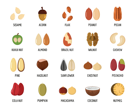 Nut types with signed names icons set. Flat illustration of 20 nut types with signed names vector icons for web