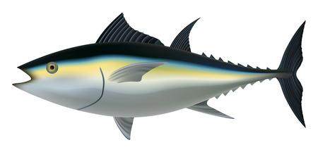 Maquette de thon. Illustration réaliste de la maquette de vecteur de thon pour la conception web isolé sur fond blanc Vecteurs
