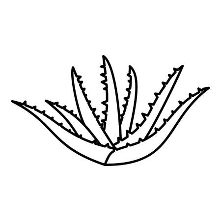 Aloe plant icon. Outline illustration of aloe plant vector icon for web design isolated on white background