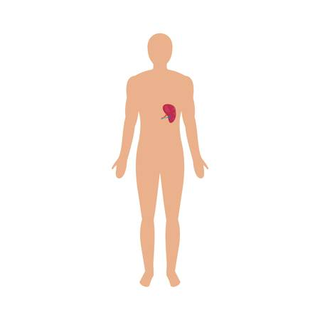 Front view of human spleen icon. Flat illustration of front view of human spleen vector icon for web isolated on white
