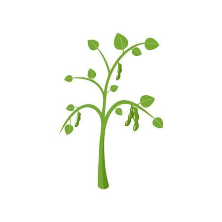 Peas plant icon. Flat illustration of peas plant vector icon for web isolated on white Stock Illustratie