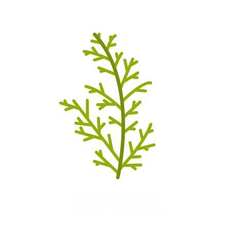 Cypress leaf icon, flat style Stock Photo