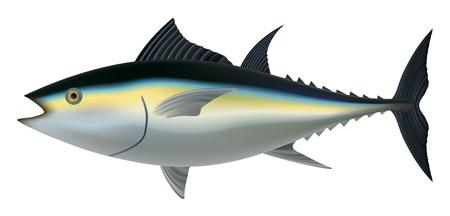 Tuna fish mockup. Realistic illustration of tuna fish mockup for web design isolated on white background