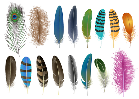 Feather icon set. Realistic set of feather vector icons for web design isolated on white background Ilustración de vector