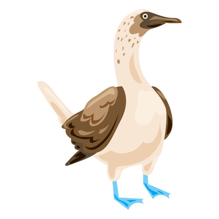 Blue footed booby icon, cartoon style